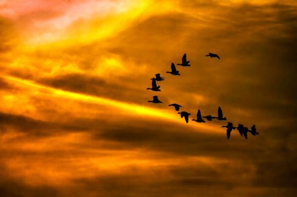 kryzys-ptaki